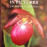 Nepal Orchids in Pictures 2004
